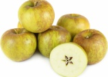 Apple 'Golden Russet'
