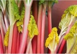 Rhubarbe 'Cawood delight'